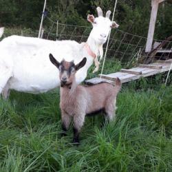 La Chèvrerie de Saint-Roch